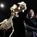 Скелеты мультипликационных героев в арт-проекте «Homo Animatus»