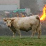 Налог на татуировку, пирсинг и коровьи газы