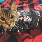 Как помогать бездомным котикам