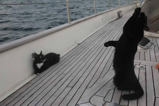 Майка и Цыля - кошки Сергея Морозова