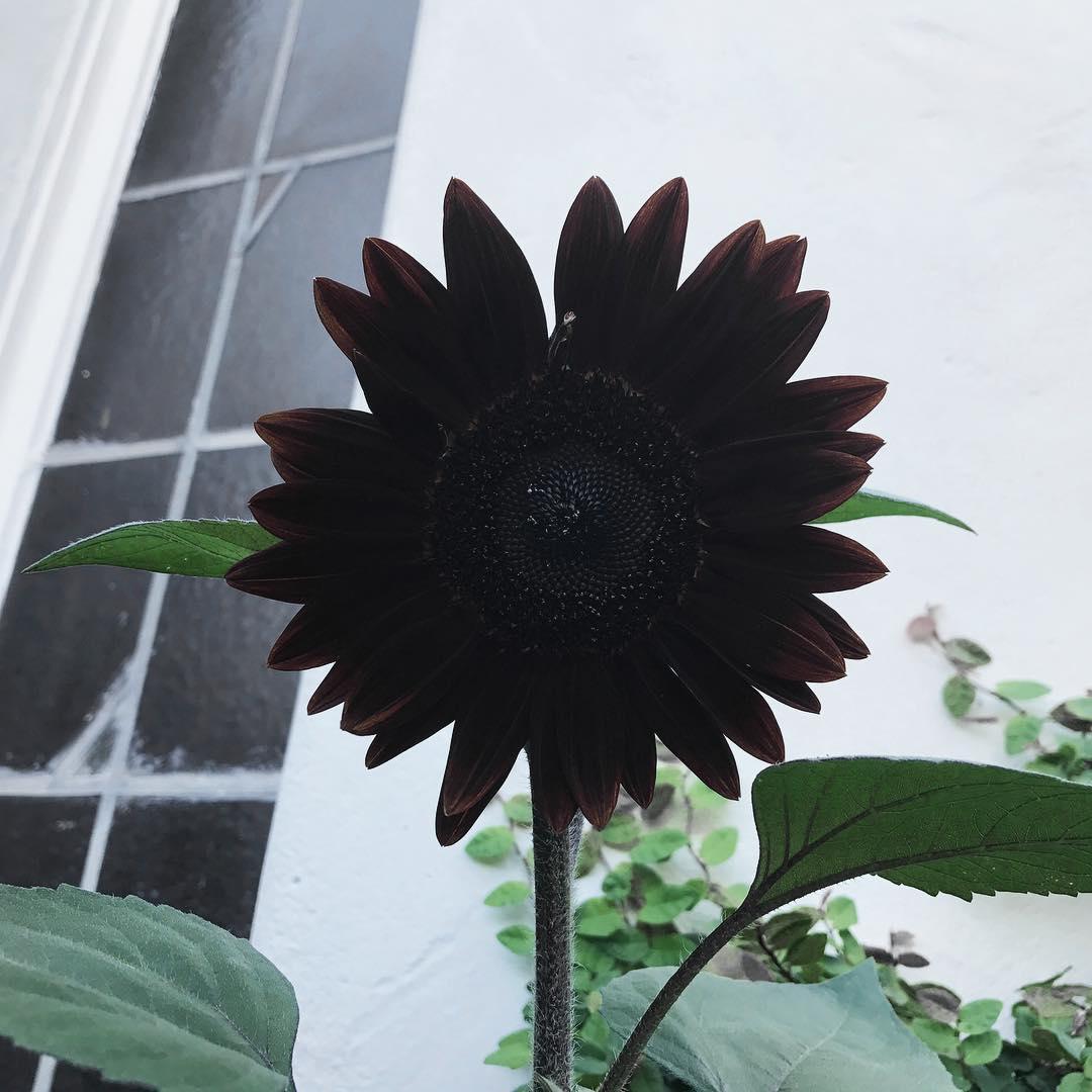 Кэт Фон Ди, Kat Von D, Katherine von Drachenberg, черные цветы, Кэтрин фон Драхенберг