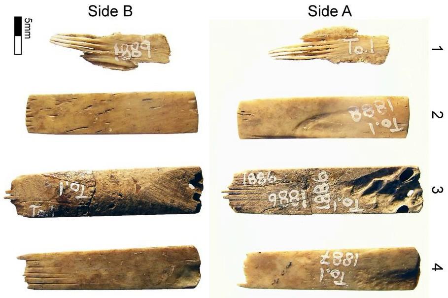 иглы для татуировки, тату-иглы, полинезийская татуировка, острова океании, остров тонга, человеческие кости, костяные иглы, археология