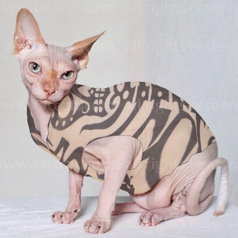 тату-одежда, одежда для кошек, sphinx concept, тату-рукава, тату-чулки, тату-нарукавники, кошки, сфинксы