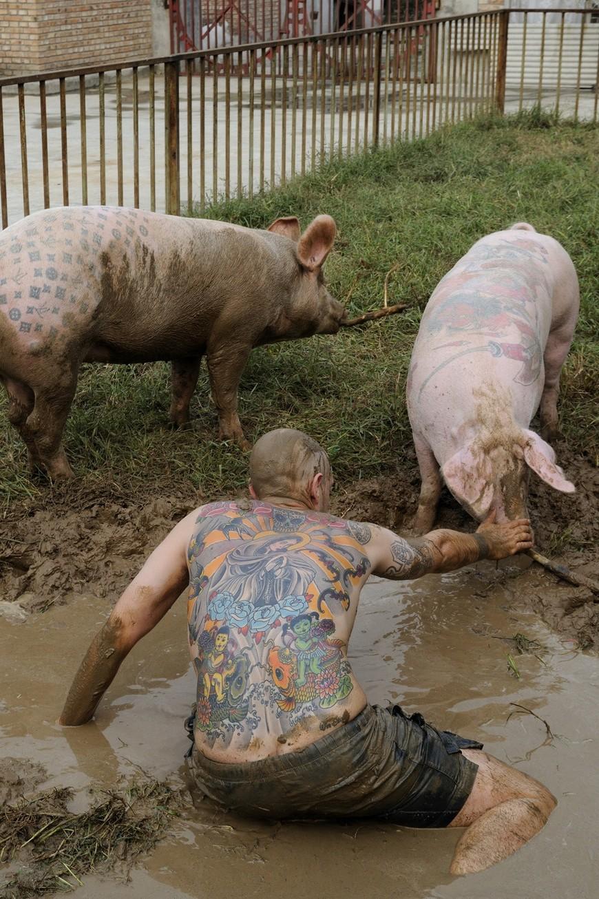 вим дельвуа: татуированные свиньи