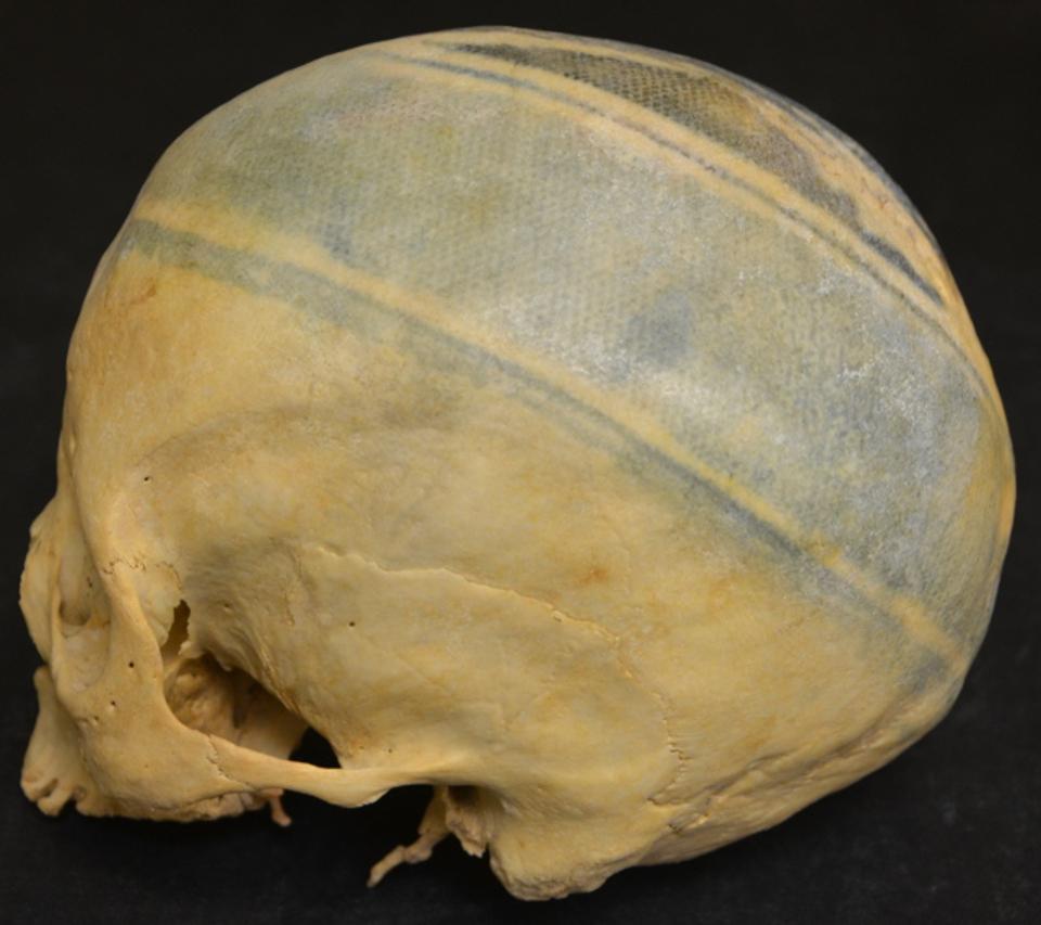 татуированный череп, череп с татуировками, тафономия, археология, антропология, история татуировки, университета западной флориды, музейное хранилище