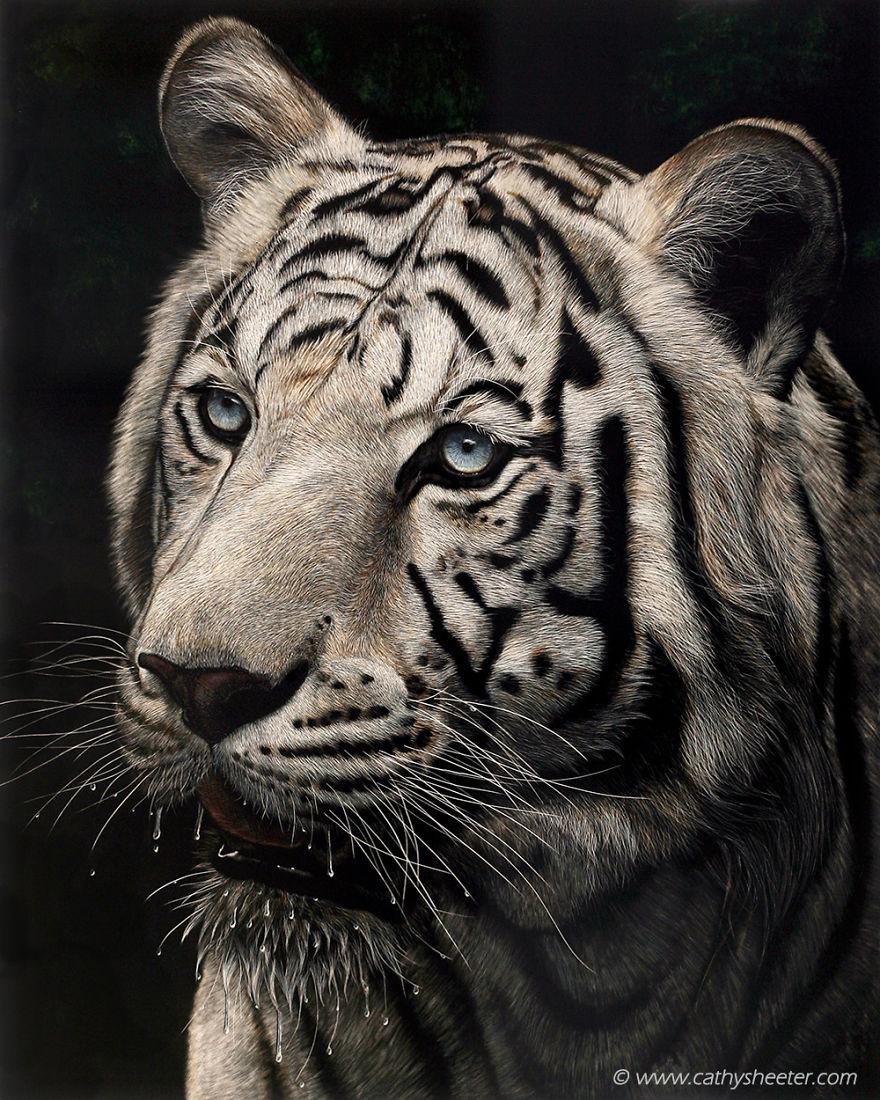 Кэти Шитерм, гиперреализм, скретчборд, тигр, техника процарапывания, реалистичные изображения животных, животные, черная тушь