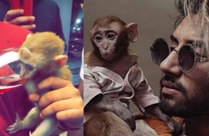 татуировщик пьет вино с обезьяной